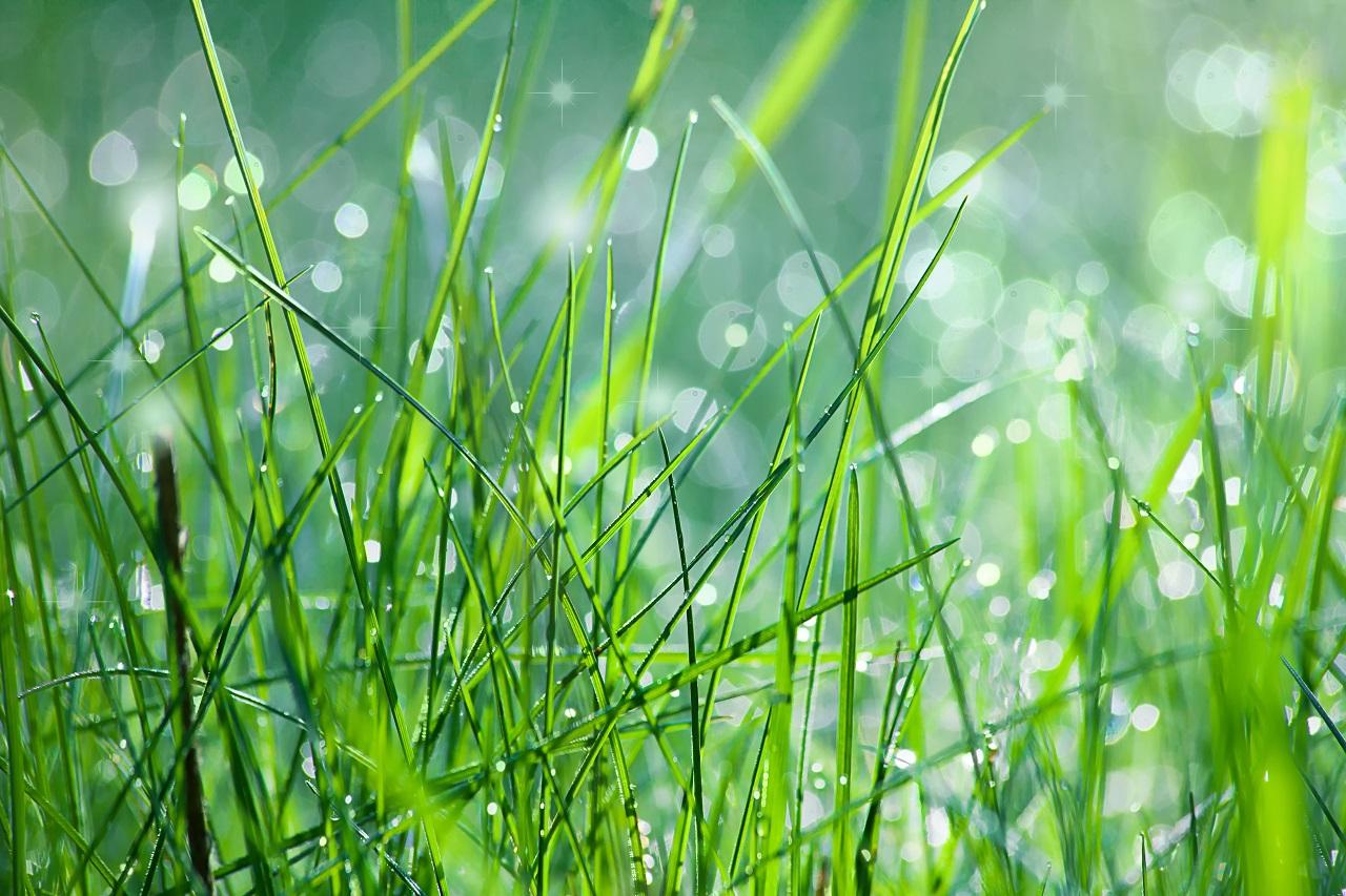 Napowietrzanie trawnika